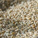 Рязанский филиал Россельхозцентра сертифицирует семеноводческие хозяйства