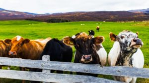 Приглашаем животноводческие предприятия и поставщиков оборудования к участию в салоне «Жизнь фермера 2019»