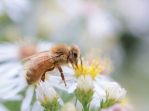 Пчеловоды и сельхозпроизводители: нужен диалог