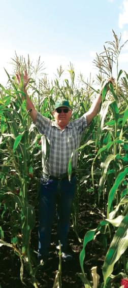 ООО ИПА «Отбор»: гарантия высококачественных семян кукурузы