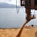 Рязанские производители приветствуют решение повысить экспортные пошлины на зерно